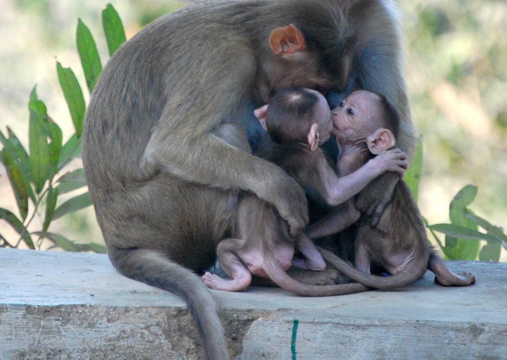 Day Fifteen Monkeys On Elephanta Define Liminal Finding The