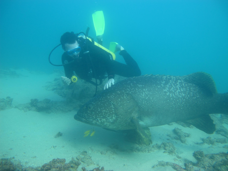 Newsflash: Snorkeling Doesn't Suck.